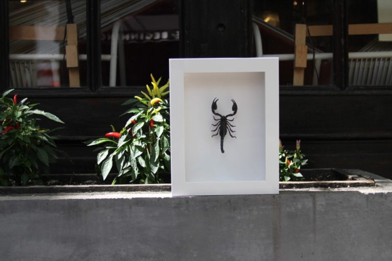 Scorpion Shadowbox